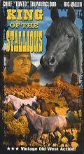 King of the Stallions